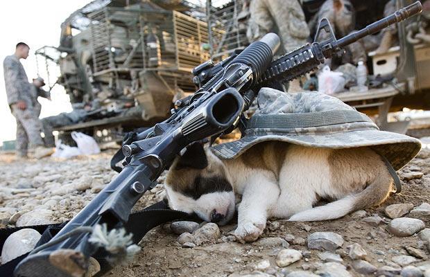 Cão de guarda no Iraque