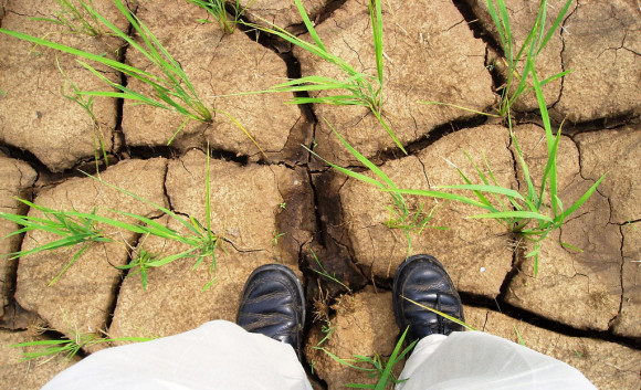 drought-IRRI-Images-flickr
