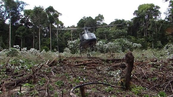 Selva amazônica _Crédito Dmavex